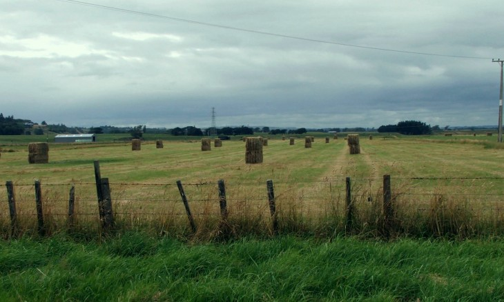 Farmland, Rangitikei, North Island