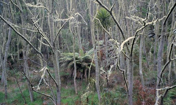 Pureora Forest Park, Manawatu-Wanganui, North Island