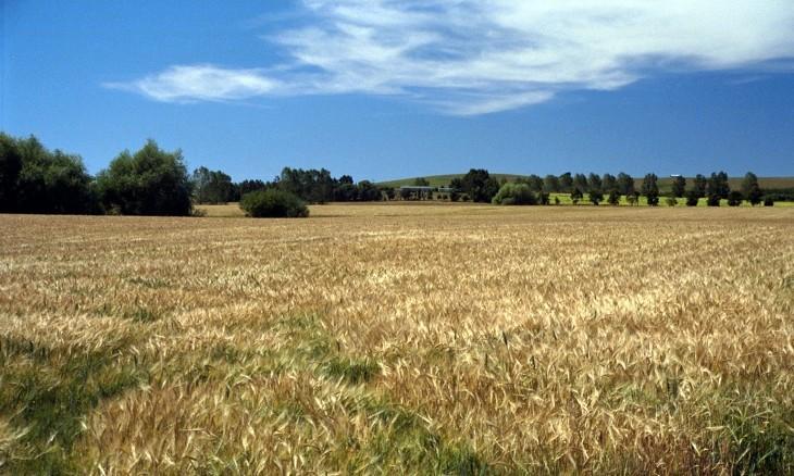 Farm near Balclutha, Otago, South Island