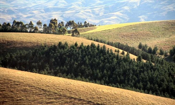Farm land near Roxburgh, Otago, South Island