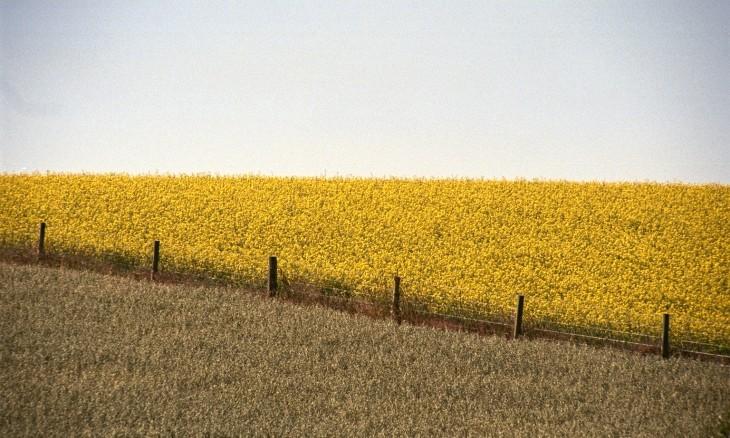 Crops near Oamaru, Otago, South Island