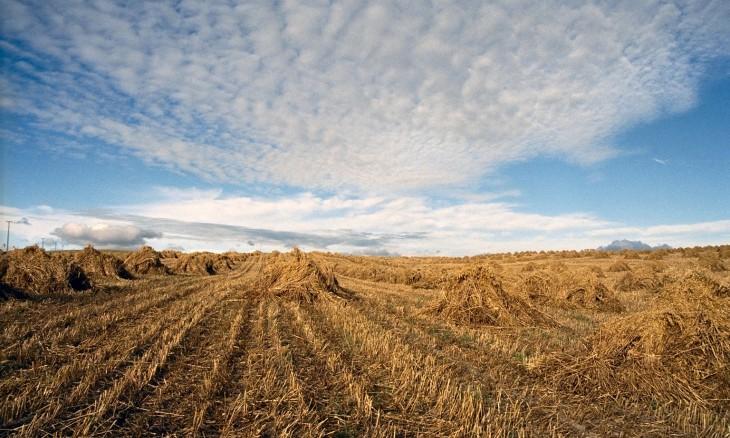 Crops near Balclutha, Otago, South Island