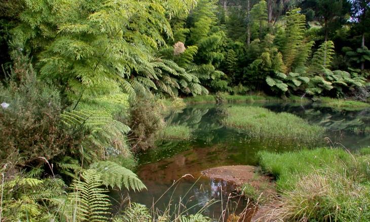 Bush pond, Taranaki, North Island