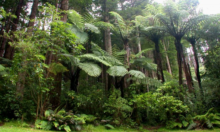 Forest, Taranaki, North Island