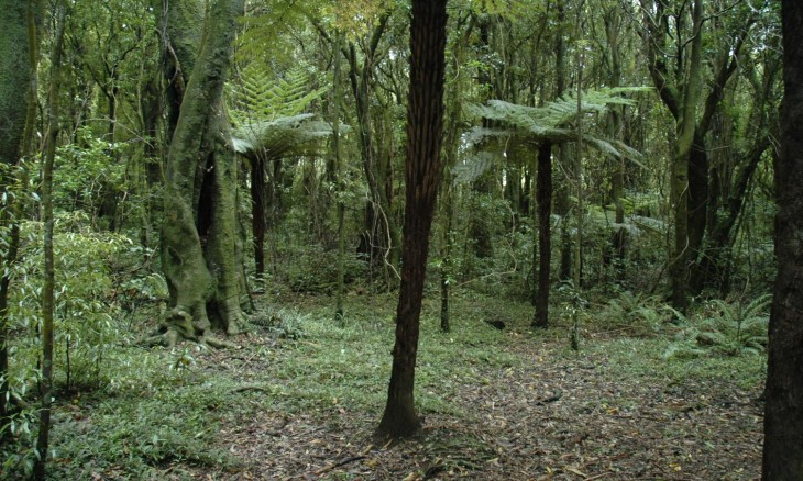 Bush, Manawatu-Wanganui district, North Island