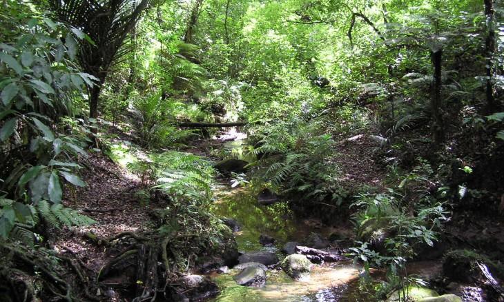 Stream near Auckland, North island