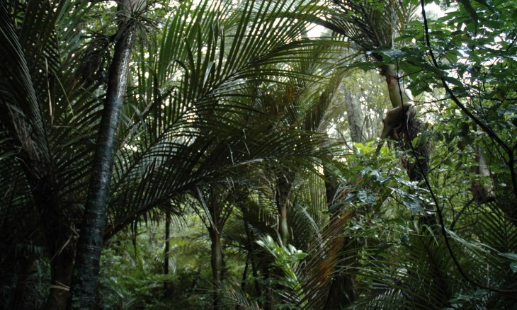 Bush near Titrangi, Auckland, North Island