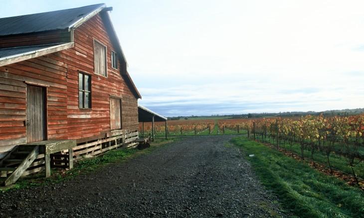 Vineyard, Hawke's Bay , North Island