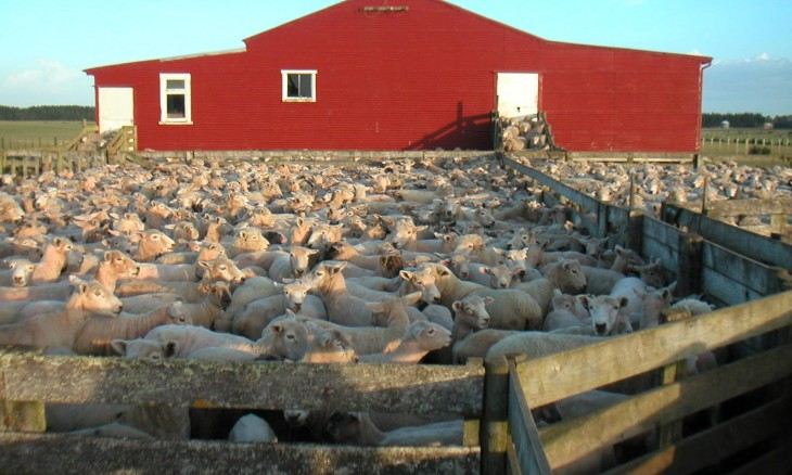 Red Woolshed Farm, Manawatu-Wanganui, North Island