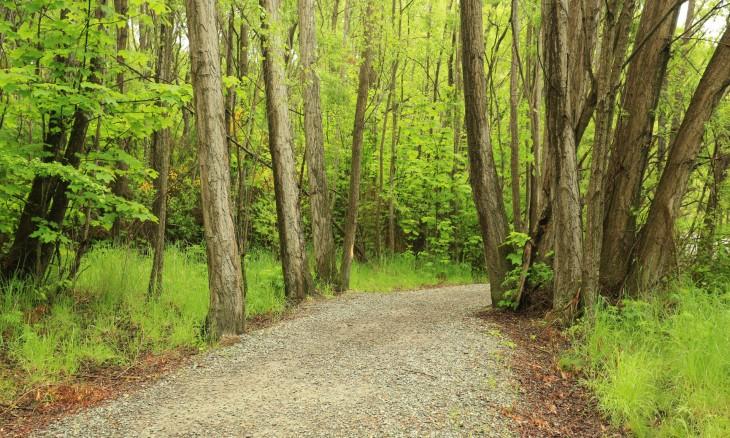 Walking track near Arrowtown, Otago, South Island
