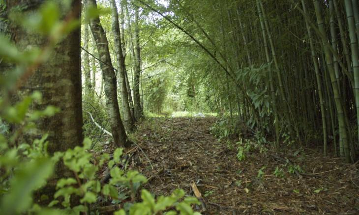 Bamboo Planation, Auckland, North Island