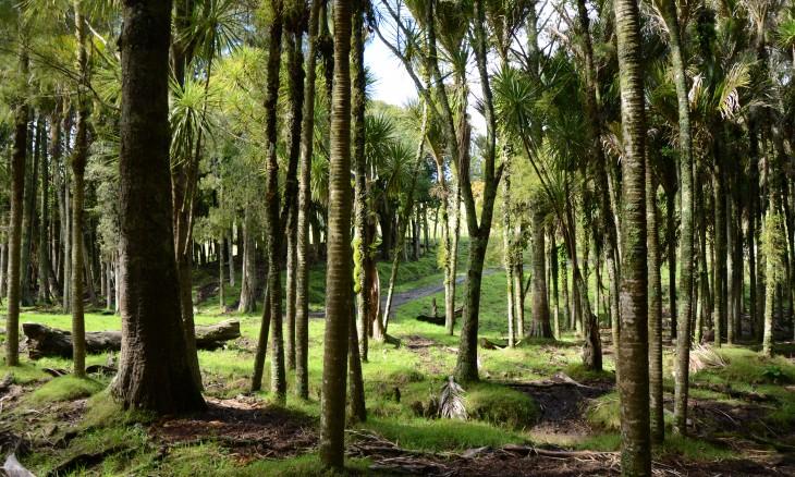 Wheelers farm, Bethells Beach, Auckland, North Island