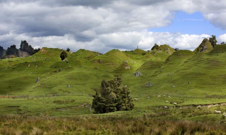 Farmland near Taihape, Manawatu-Wanganui, North Island
