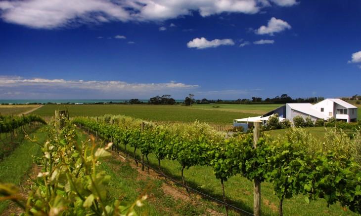 Haumoana vineyard, Hawke's Bay, North Island