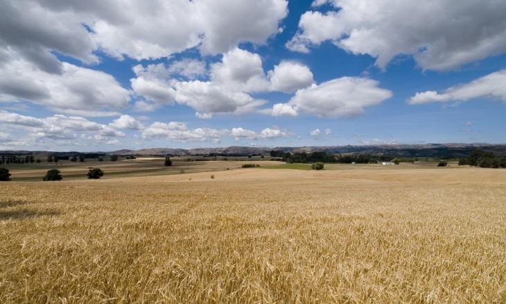 Crops near Martinborough, Wairarapa, North Island