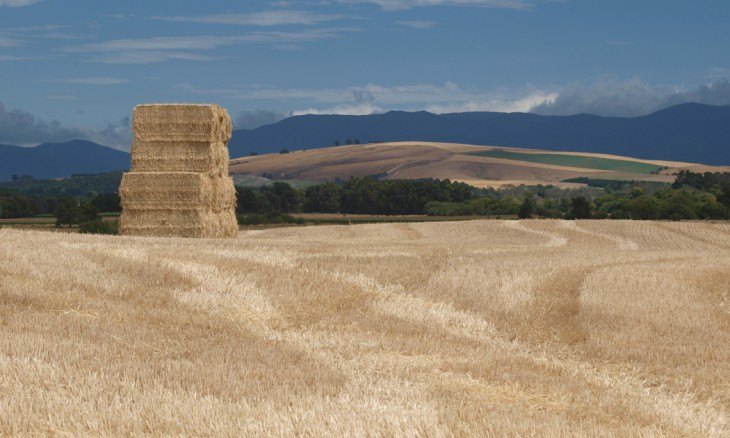 Farmland near Martinborough, Wairarapa, North Island