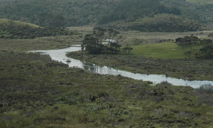 Swamp near Bethells Beach, Auckland, North Island