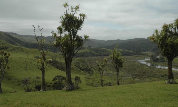 Countryside near Bethells Beach, Auckland, North Island