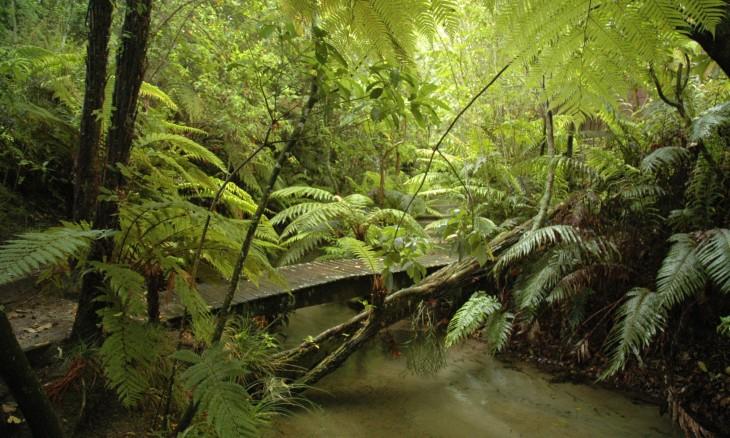 Bush near Lake Tarawera, Rotorua, North Island