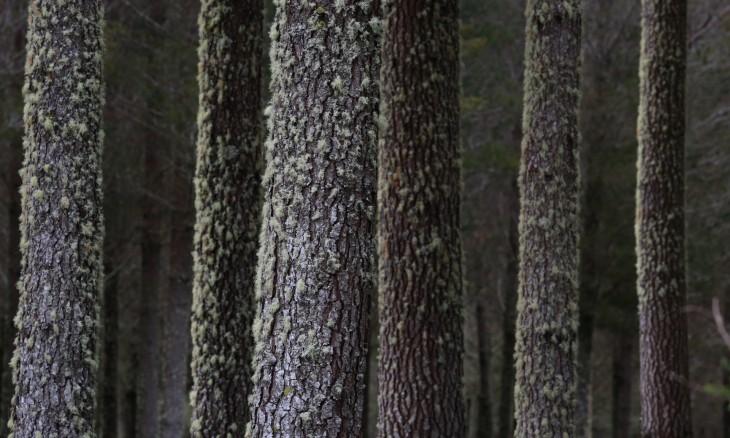 Trees near Turangi, Manawatu-Whanganui, North Island