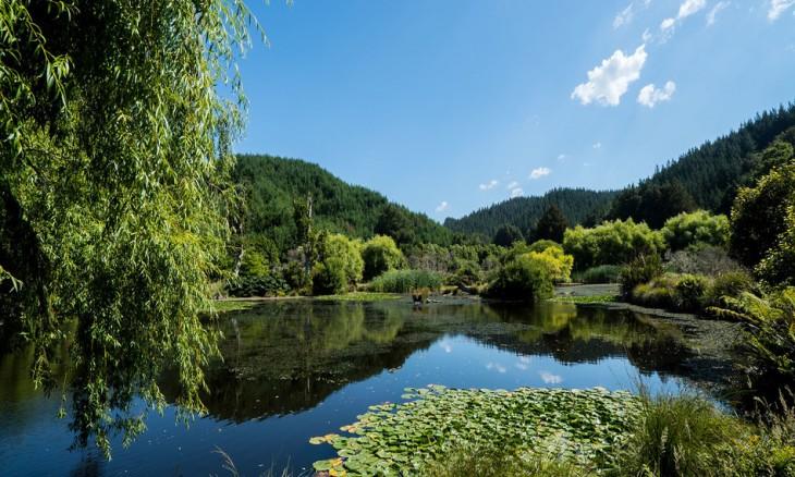 Titoki Ponds, Bay of Plenty