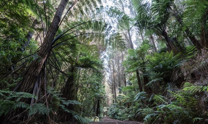 Titoki Estate, Rotorua