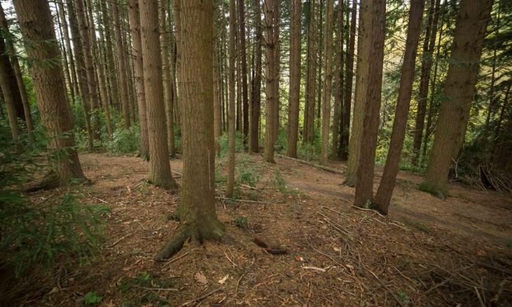 Redwoods, Otago