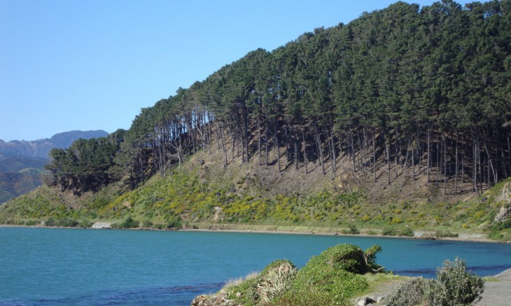 Miramar Peninsula, Wellington