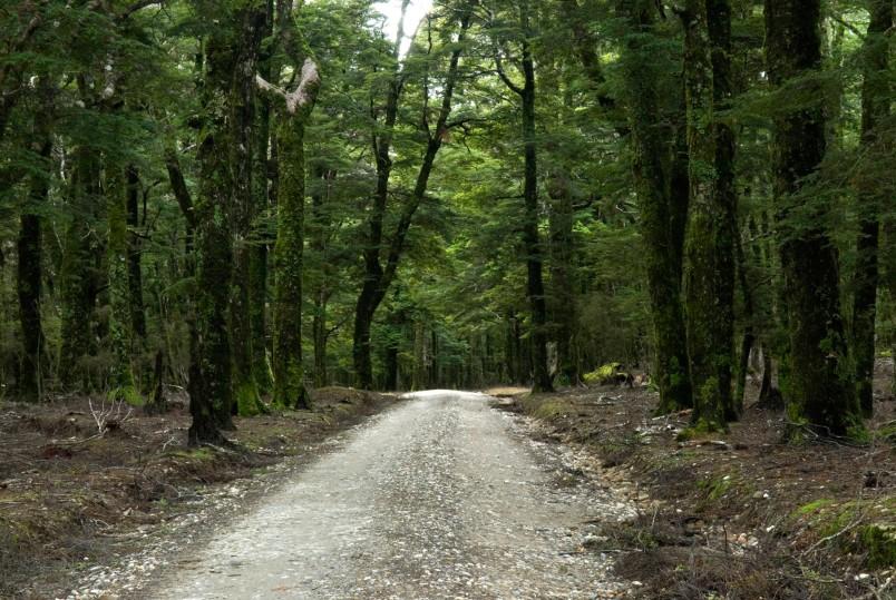 Canaan Downs, Abel Tasman National Park