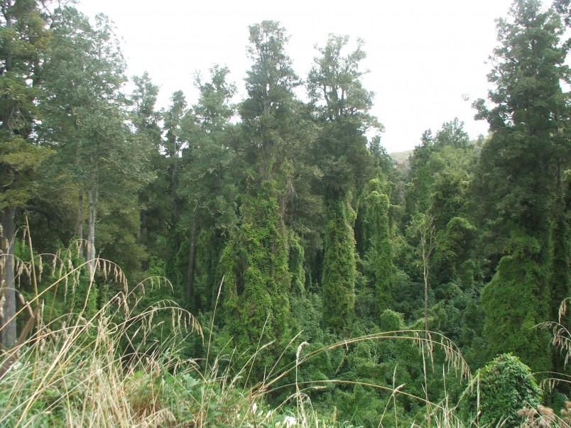 Taihape bush, Taihape, North Island