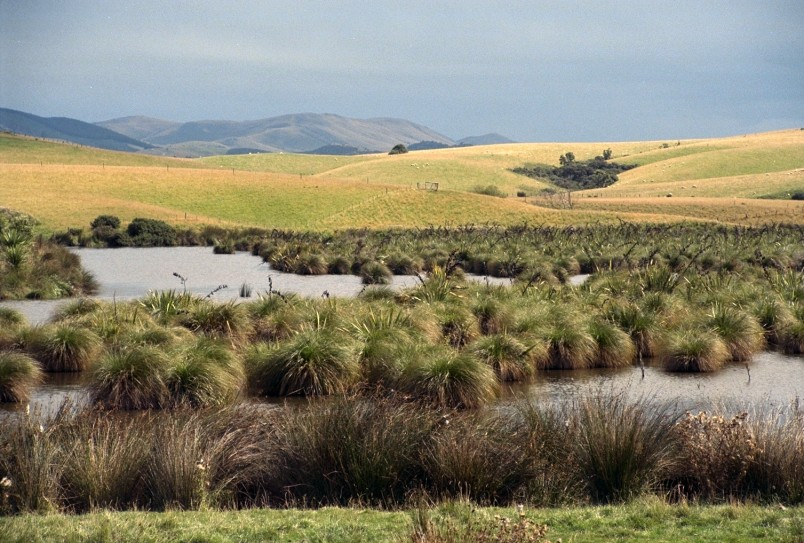 Catlins, Southland, South Island
