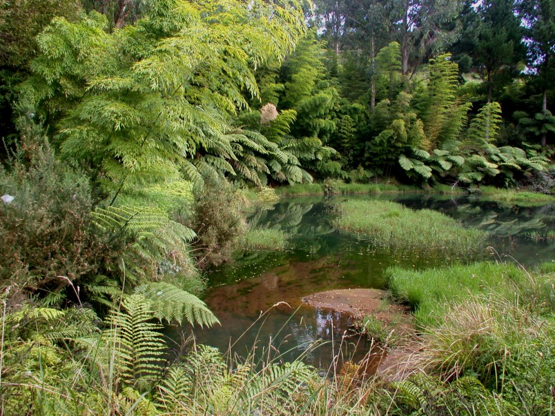 Bush pond, Taranaki, North Island