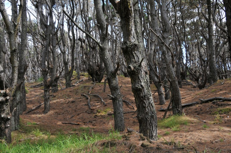 Woodhill Forest, Auckland, North Island