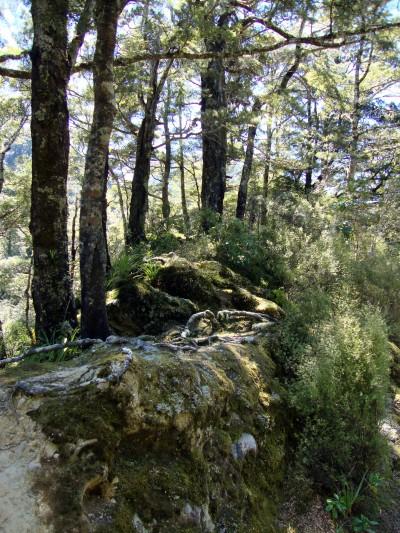 Kaitoke Regional Park, Wellington, North Island