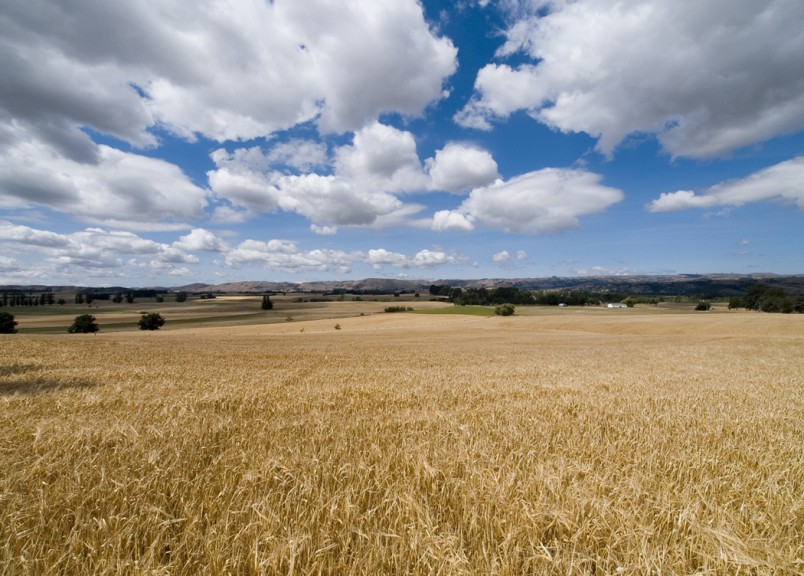 Crops near Martinborough, Wairarapa, North Island