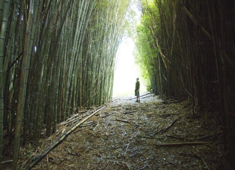 Bamboo Farm, Auckland