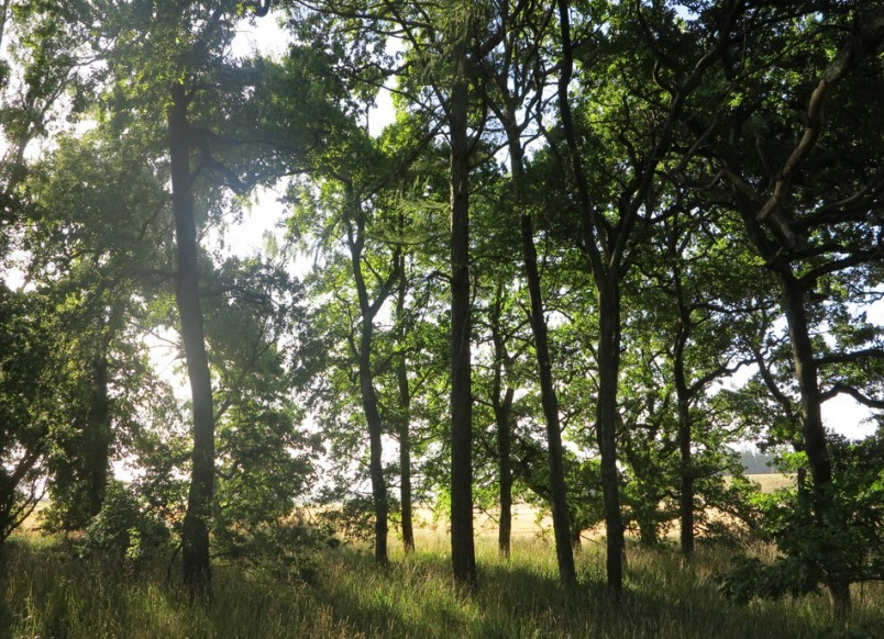 Racecourse Hill Forest, Canterbury