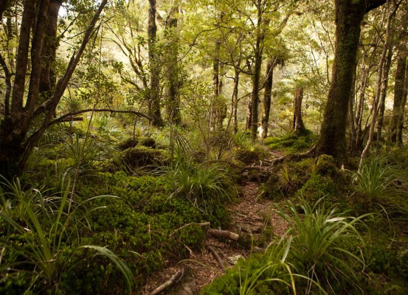 Mt Holdsworth, Wellington
