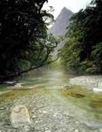 Stream near Milford, Southland, South Island