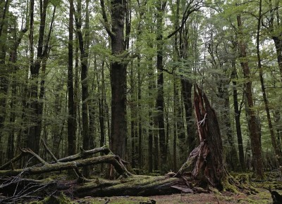 Arcadia Forest, Otago